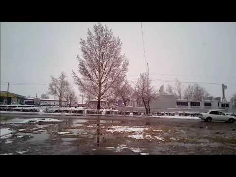 27.04.2019г. снег в Волчихе Алтайский край  НикПетрович
