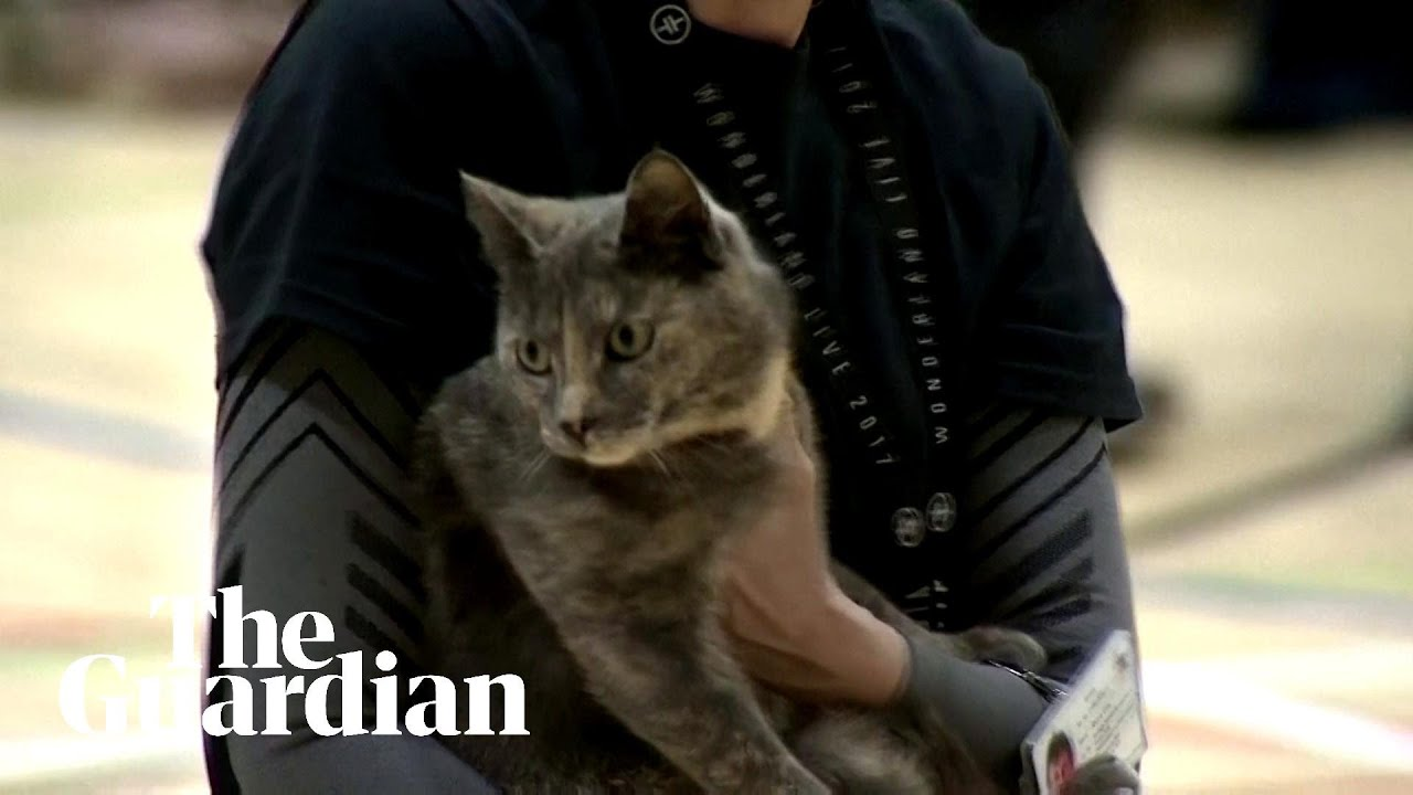 Cat carried away from Scottish polling station