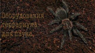 Оформление террариума для паука птицееда