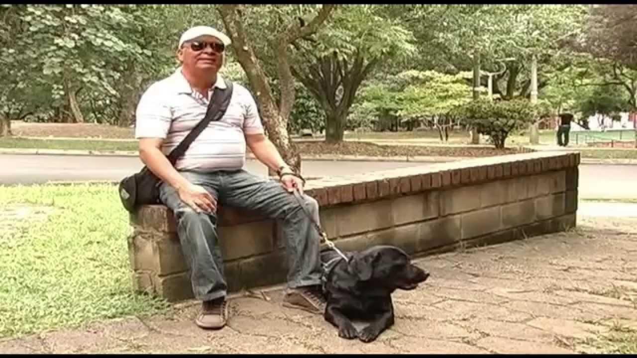 Como Ayuda El Perro Lazarillo A Un Ciego Tvagro Por Juan Gonzalo Angel Youtube