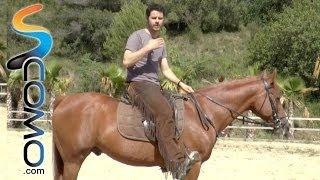 Posición correcta sobre el caballo - Consejos hípica