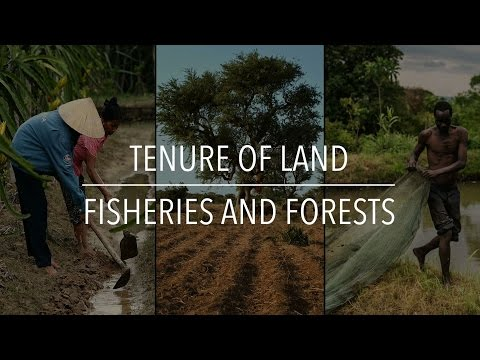 FAO Policy Series: Tenure Of Land, Fisheries And Forests