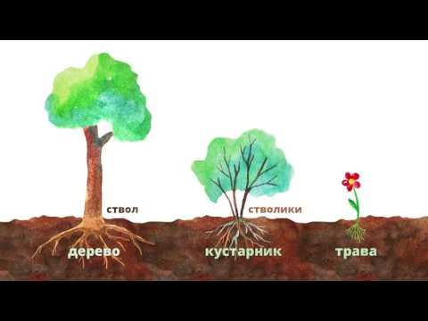 19. Строение растений. Часть 2