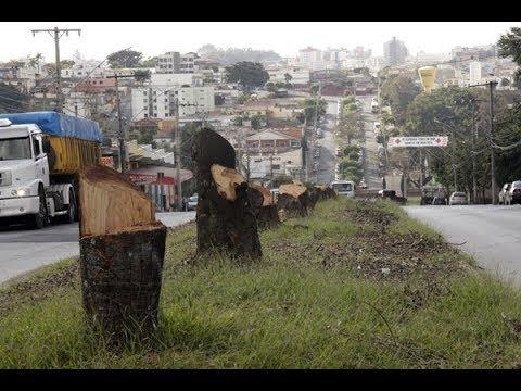 Competencia do municipio em relação ao meio ambiente