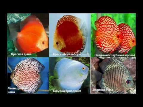 фото рыбок их названия !