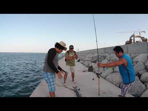 7.2KG Baracuda in Reem Island