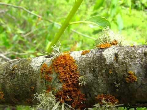 Lichen Identification Methods