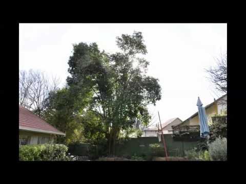 Einde van die boom