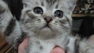 Котёнок осваивается. Бася #1.