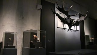 http://www.museum.or.jp/modules/topics/?action=view&id=927 国立科学...