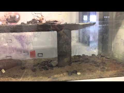Why An Aquarium May Smell?