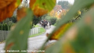 KONIE HUBERTUS 2014 Tuchów-Karwodrza (skrót+gonitwa+wyścigi)