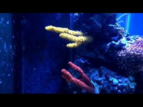Mounting A Sponge In A Reef Tank