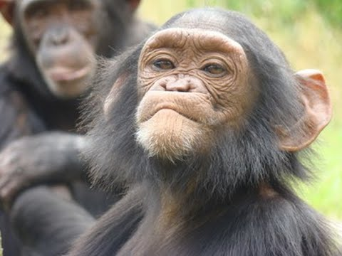 the changing ape - full documentary