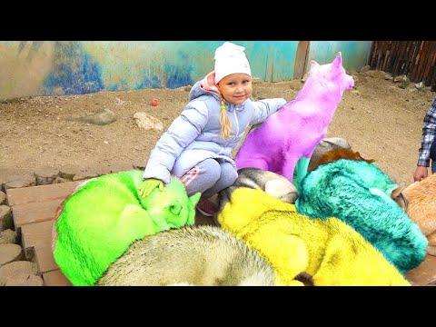 Алиса играет с Хаски! Самые добрые собаки в мире / Мими Лисса - Видео из ютуба