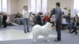 Все О Домашних Животных: Мастер-Класс По Хендлингу, Часть Вторая