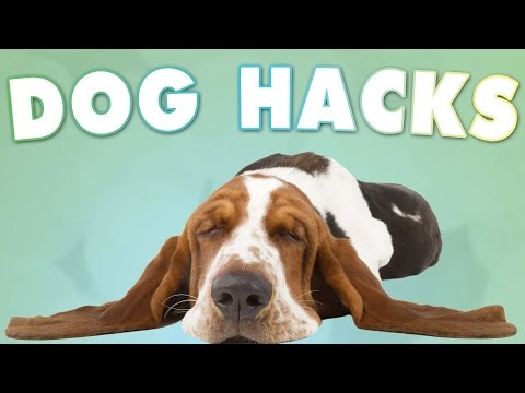 5-tricks-all-dog-owners-should-know