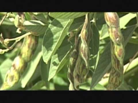 Junagadh Agricultural University Invocation Song
