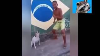 Танцующие собаки. №1