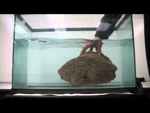 Does Mass Affect Whether An Object Floats Or Sinks In Water?