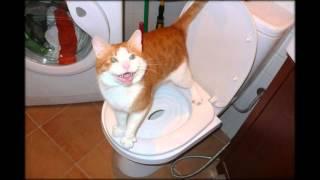 кошка ходит в туалет рядом с лотком