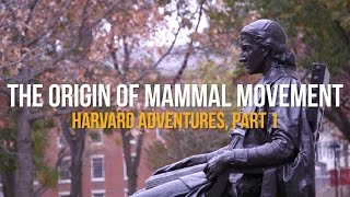 The Origin Of Mammal Movement: Harvard Adventures, Part I