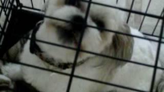 Dakota pooped!