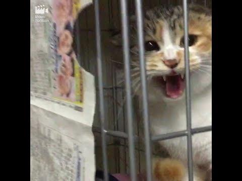 【閲覧注意】シャーシャー怒る保護猫さん