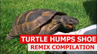 Turtle Has Sex With A Shoe - REMIX COMPILATION