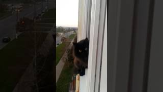 Ненормальный кот