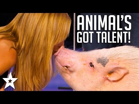 Animal's Got Talent! | Including Talking Parrots, Singing Dogs & More!
