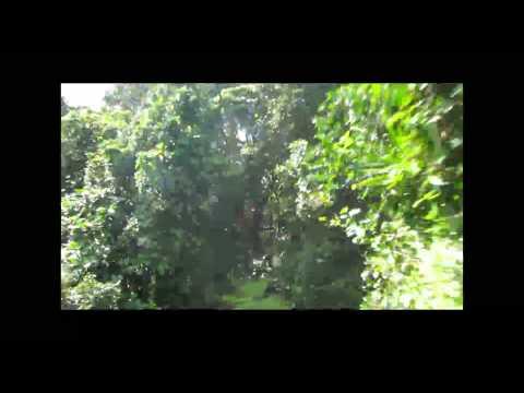 Zipline Fiji