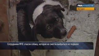 Спасатели вызволили собаку из подвала в Магадане