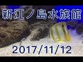 【新江ノ島水族館】2017/11/12(日)