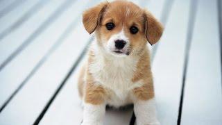 I GOT THE CUTEST DOG EVER!? - (CUTE DOG) - PUPPY