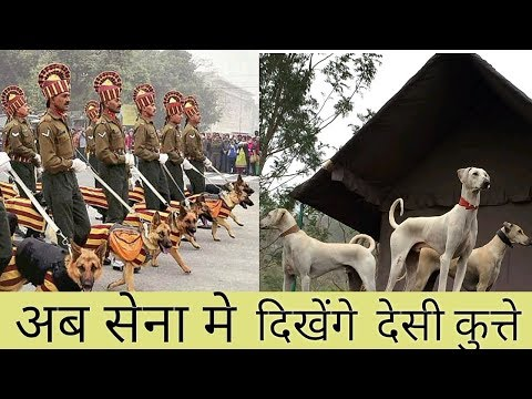 First Time Indian Army will include indigenous Dog Hunts || At mix ||  street dog