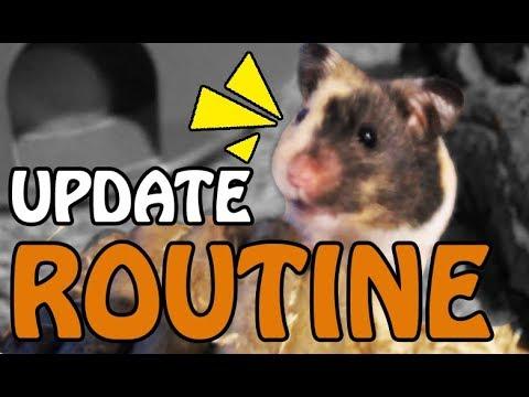 Hamster Pflege ♥ Säuberung der Quarantäne ♥ Tricos Update