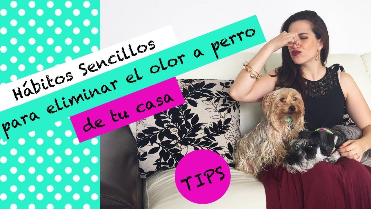 C mo eliminar el olor a perro de tu casa los h bitos - Eliminar olor tabaco casa ...