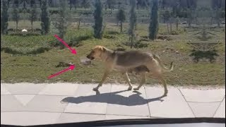 Собака куда-то несла миску с едой. Мужчина проследил и выяснил, кого дворняжка хотела накормить