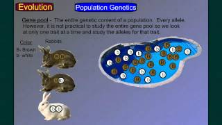Evolution Part 4A: Population Genetics 1