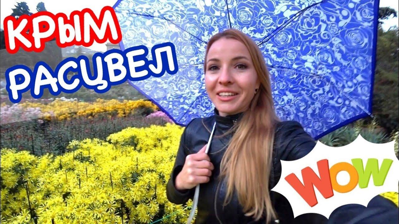 КРЫМ: Бал хризантем 2020 в Никитском ботаническом саду // Ялта  Крым сегодня