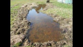 Rice Pond 2016