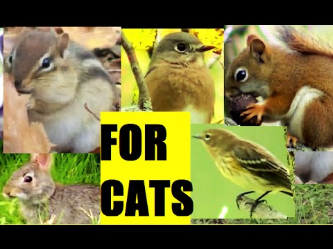 ALLURING 2 HOUR MOVIE FOR CATS !  Squirrel, Birds,and Rabbits