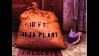10 Ft. Ganja Plant - Walkey Walk Tall