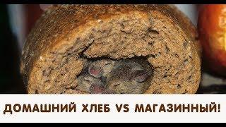 Домашний хлеб против магазинного! 10 дней