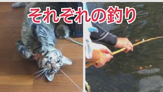 猫 釣れましたし 魚も釣れました!(大漁)【唐草猫 ムタさん】 thumbnail