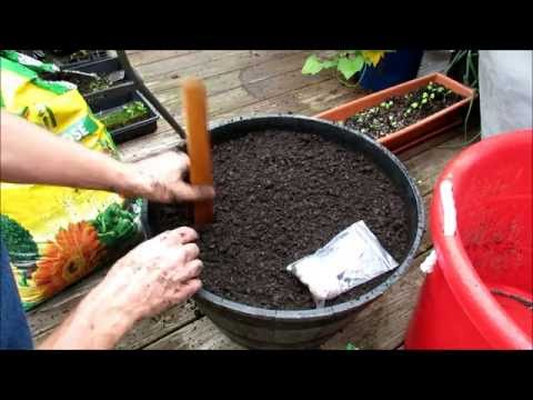 Growing Organic Garlic in Containers: All the Planting Details - KIS Series