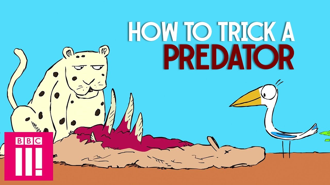 How To Trick A Predator With Creative Insults | Barbaric Tales From The  Serengeti