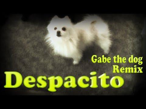 Gabe The Dog /Despacito - Explosion & Azerek [Remix]