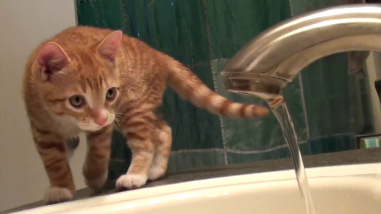 7 Signs That Cats Are Scientists